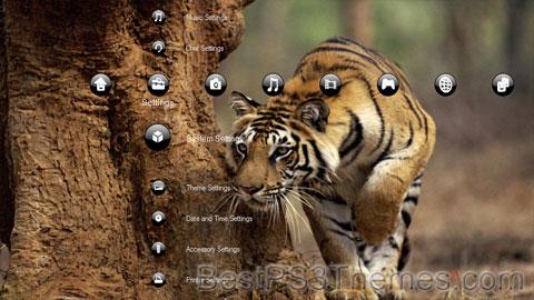 Animals Theme