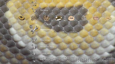Ball Python Morphs Theme