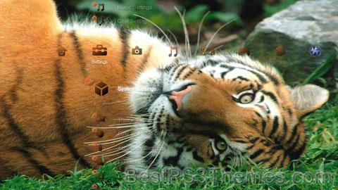 Tiger-4 Theme